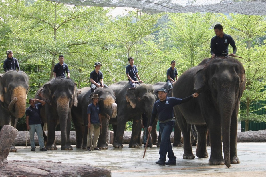 The staff at the Kuala Gandah Elephant Sanctuary will show the BRATs what they do behind the scenes of the amazing facility. Photo: SIMON KHOO