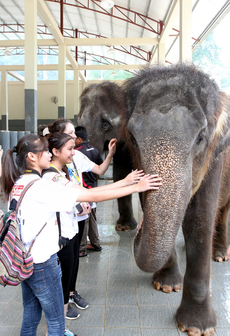 BRATs Raub participants got up close and personal with these big grey beasts at the Kuala Gandah Elephant Sanctuary. But it wasn't all fun and games - they had to clean out the elephants' stalls and feed them brunch, too! Photo: SAMUEL ONG/ The Star